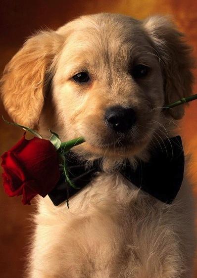 Heart melting puppies 5