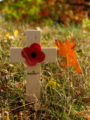 Remembrance Day and poppy