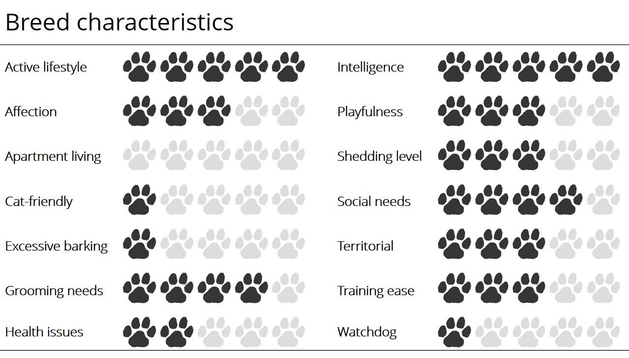 Meet the breed: Siberian Husky – SheKnows