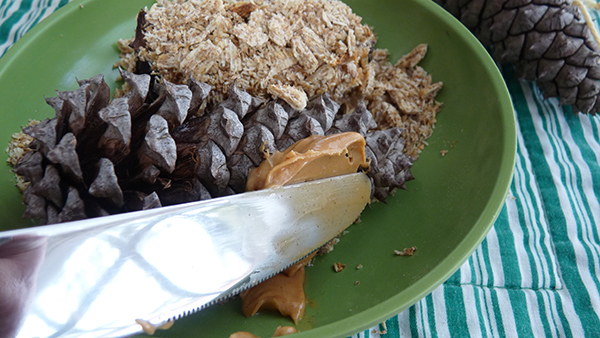 Peanut butter on pine cone