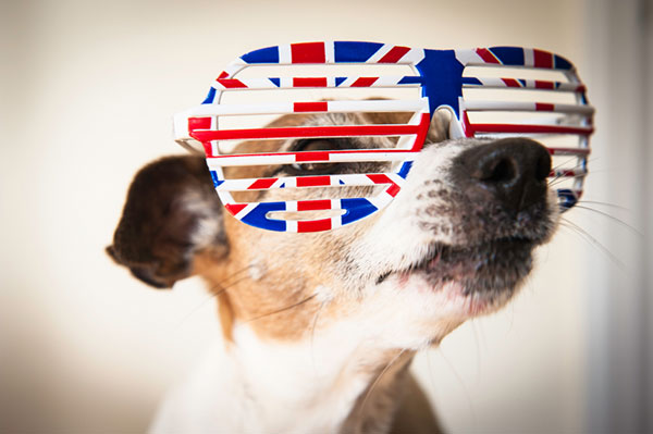 Union Jack Russell