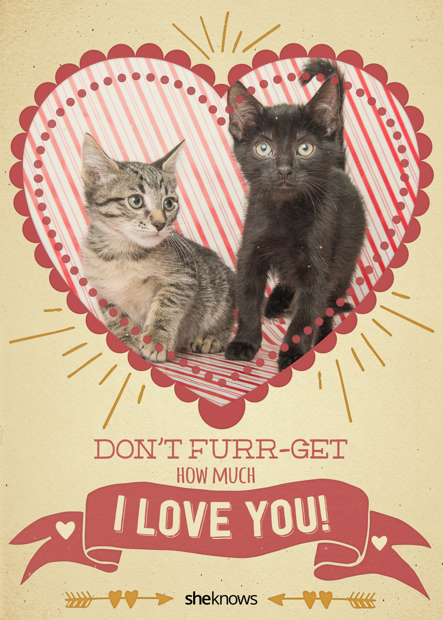 Valentine's Day card cats