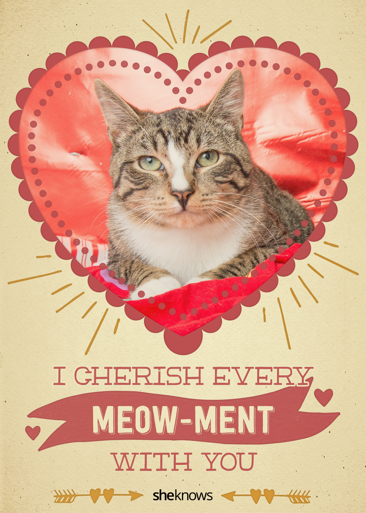 Valentine's Day cat cards