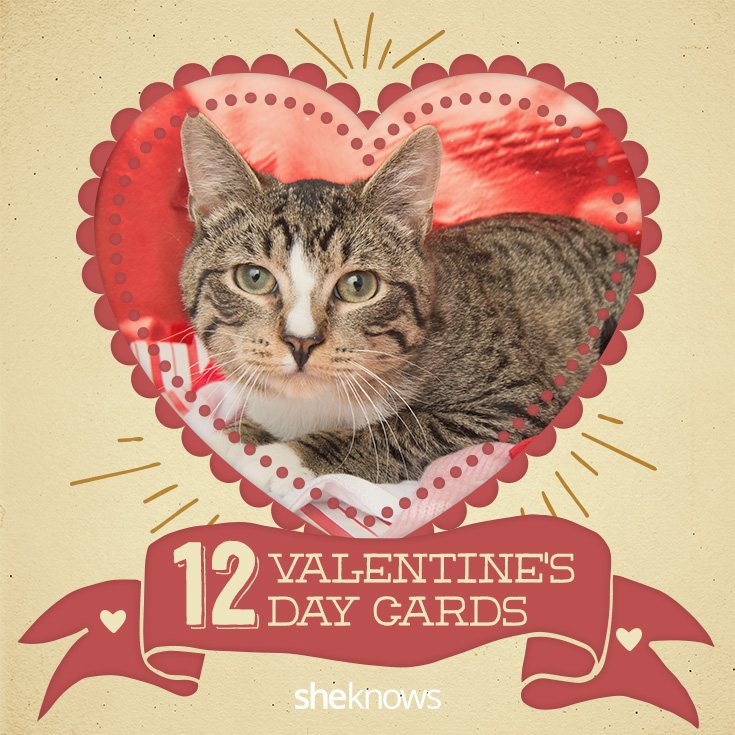 12 Kitty Cat Valentine S Day Cards That Will Make You Aww Sheknows