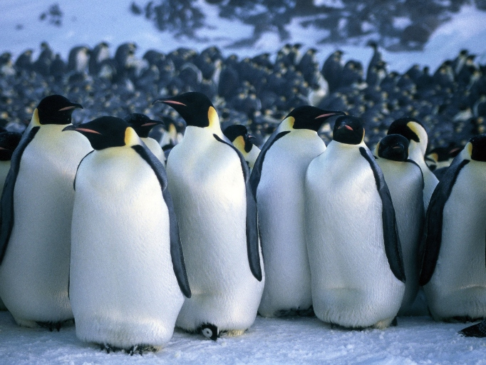 Non-Holiday Winter Movies to Watch Right Now: 'March of the Penguins'