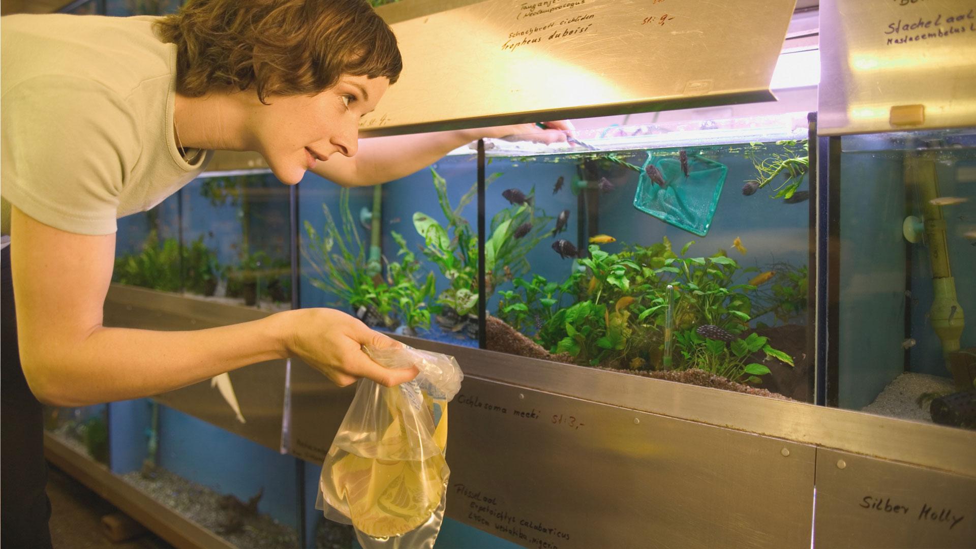 Woman selecting fish