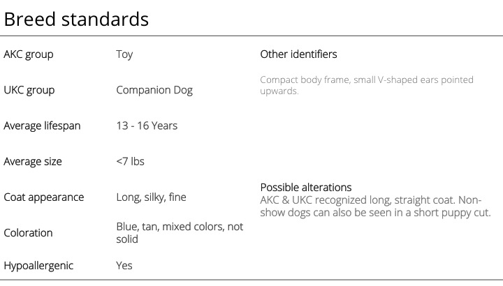 Yorkshire Terrier breed standards