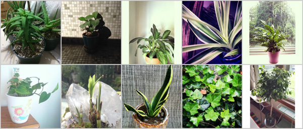 Top 10 houseplants for air-filtration/quality