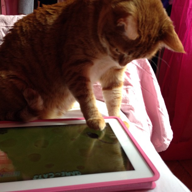 Cat playing with iPad