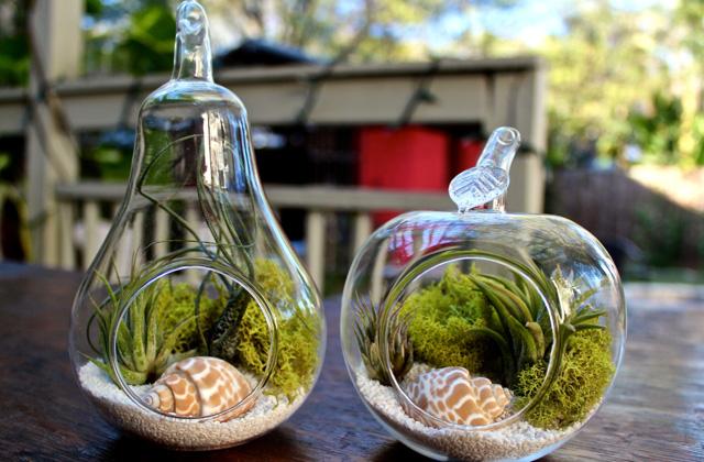 terrarium for plants