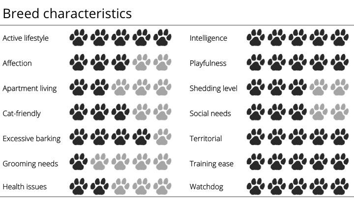 australian cattle dog breed characteristics