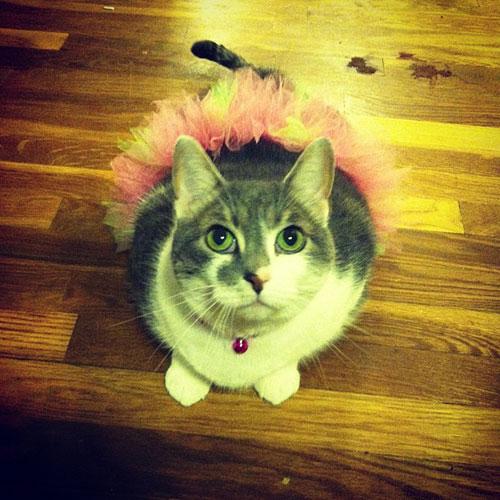 Ballerina Kitty 11