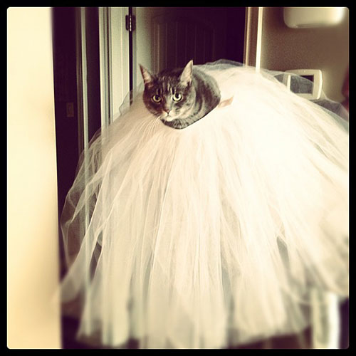 Ballerina Kitty 13