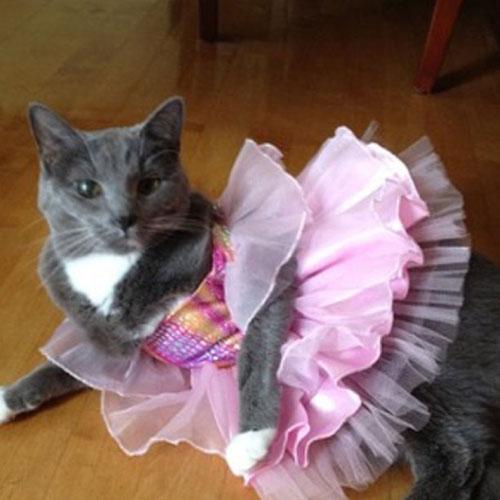Ballerina Kitty 14