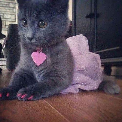 Ballerina Kitty 15