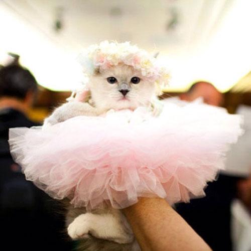 Ballerina Kitty 16