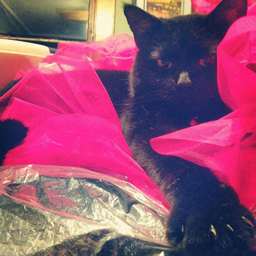 Ballerina Kitty 17