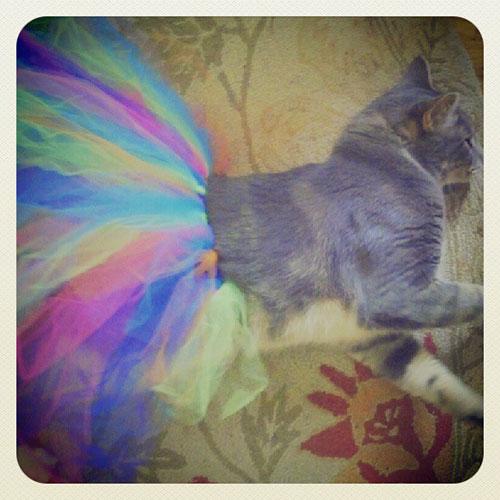 Ballerina Kitty 18
