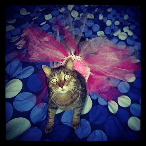 Ballerina Kitty
