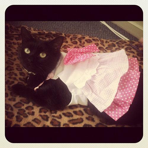Ballerina Kitty 20
