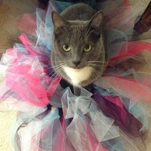 Ballerina Kitty 2