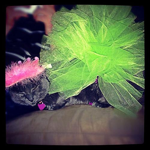 Ballerina Kitty 3