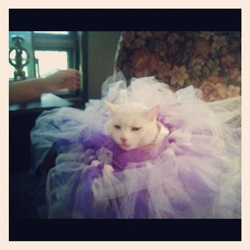 Ballerina Kitty 4