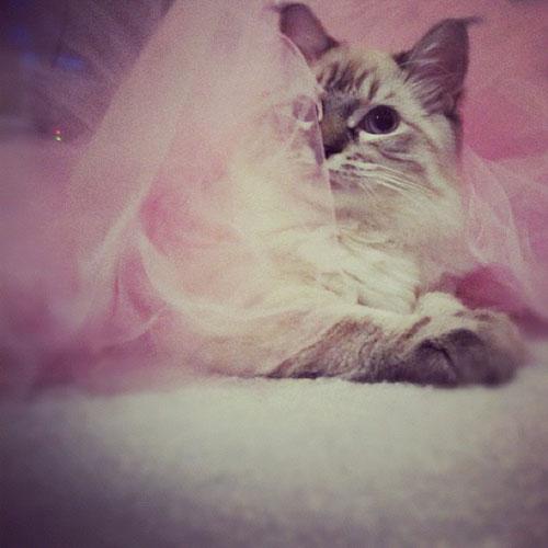 Ballerina Kitty 5