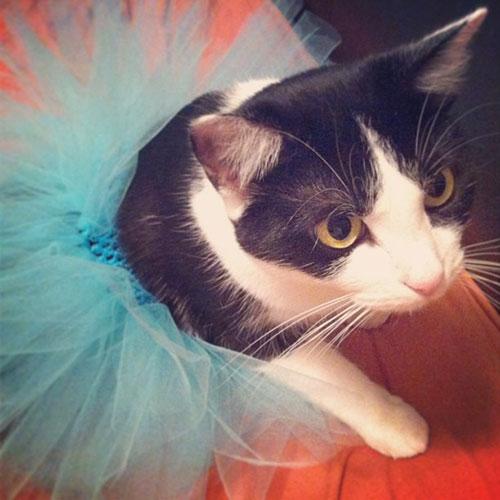 Ballerina Kitty 6