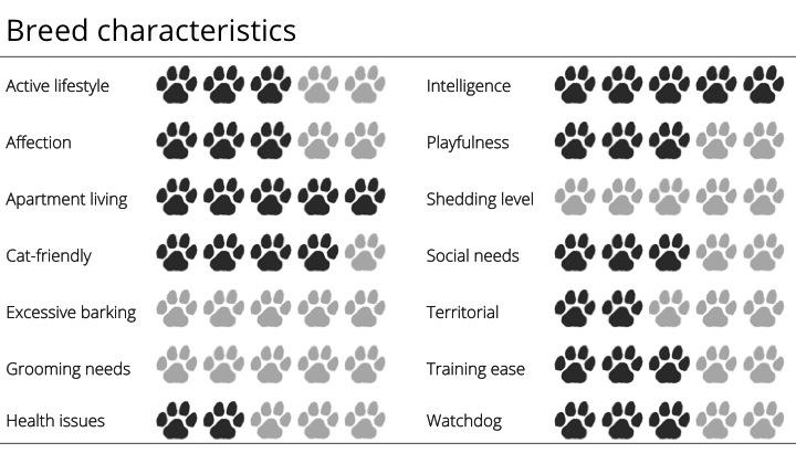 basenji breed characteristics