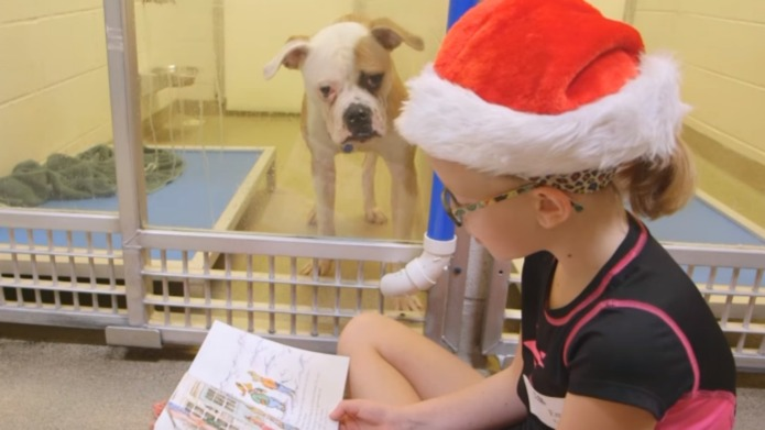 Children are reading to shelter dogs,