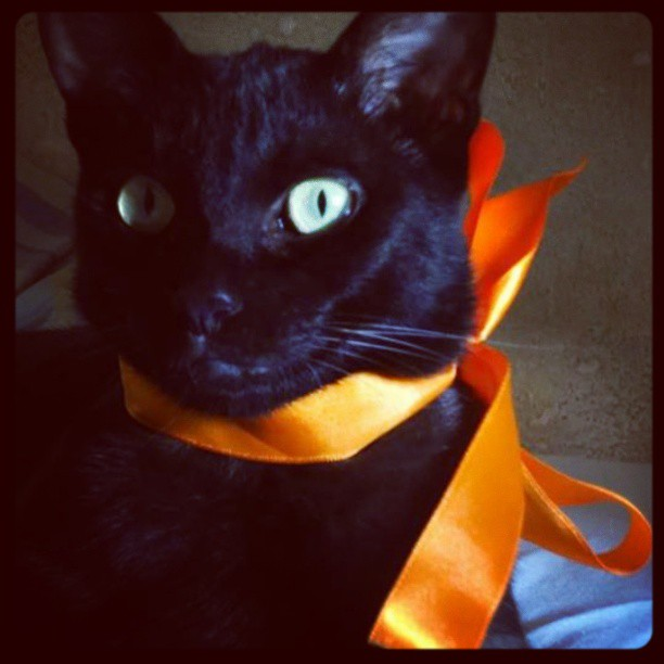 black cat with orange ribbon
