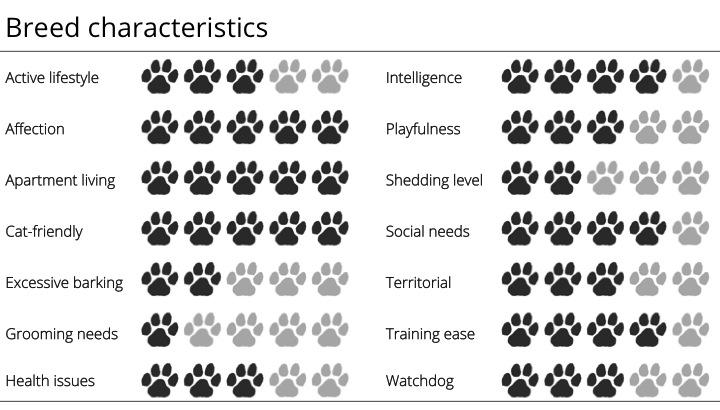 boston terrier bree characteristics