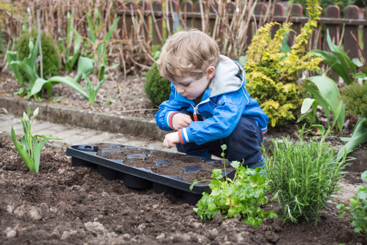 Boy planting seeds   Sheknows.com