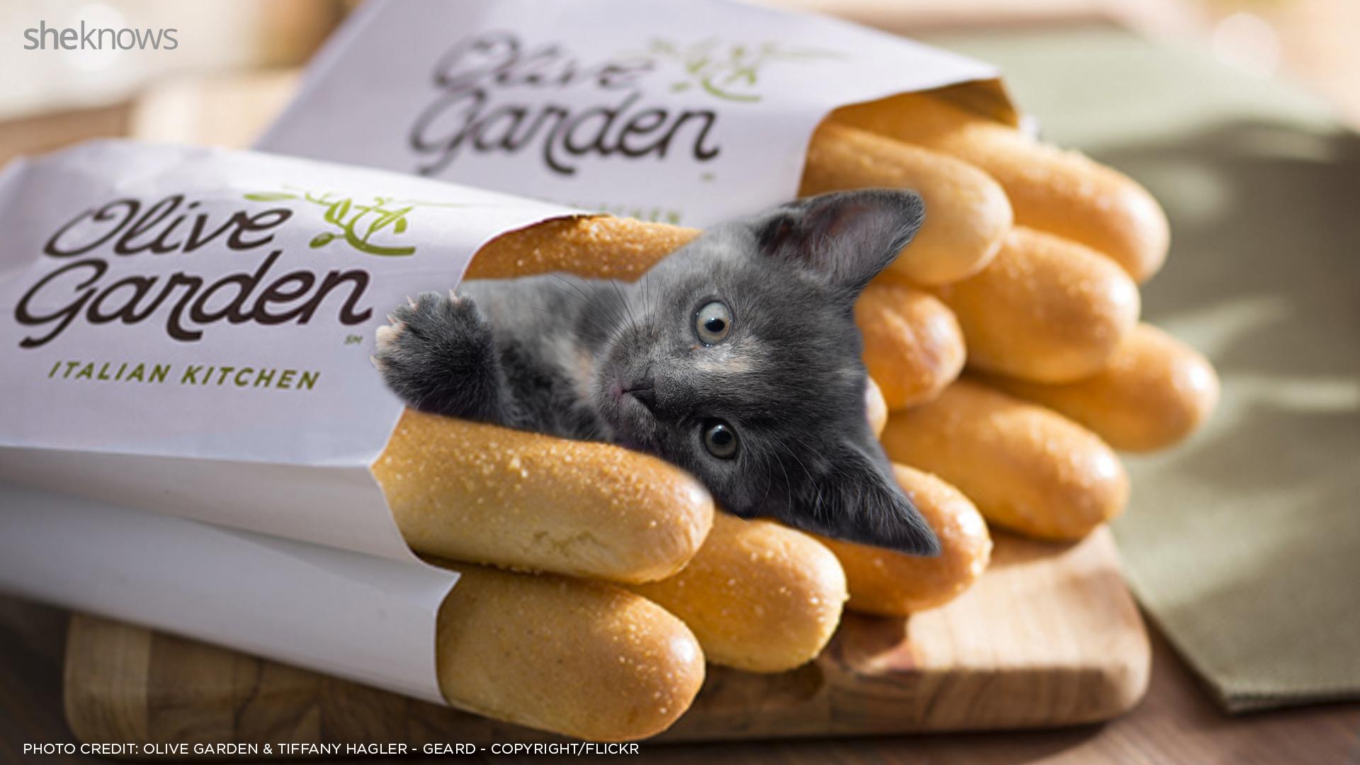kitten with breadsticks