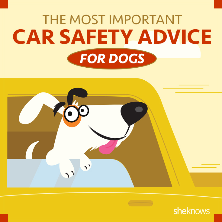 Car safety for dogs