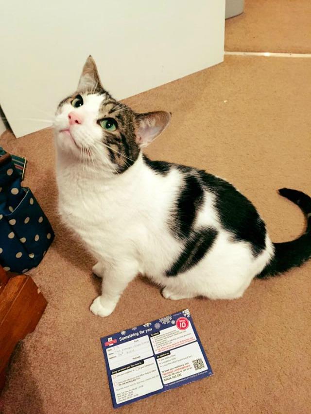 Cat advent calendar