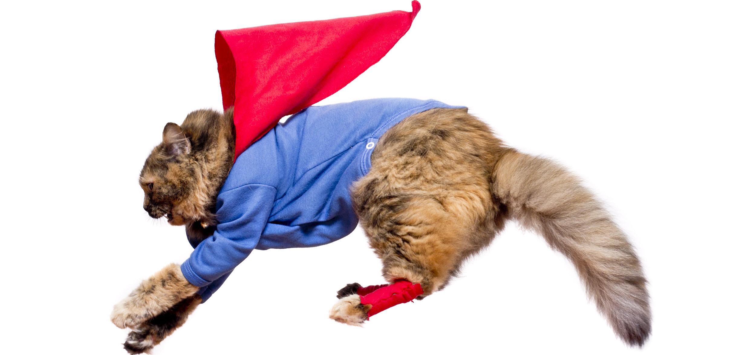 Cat hero