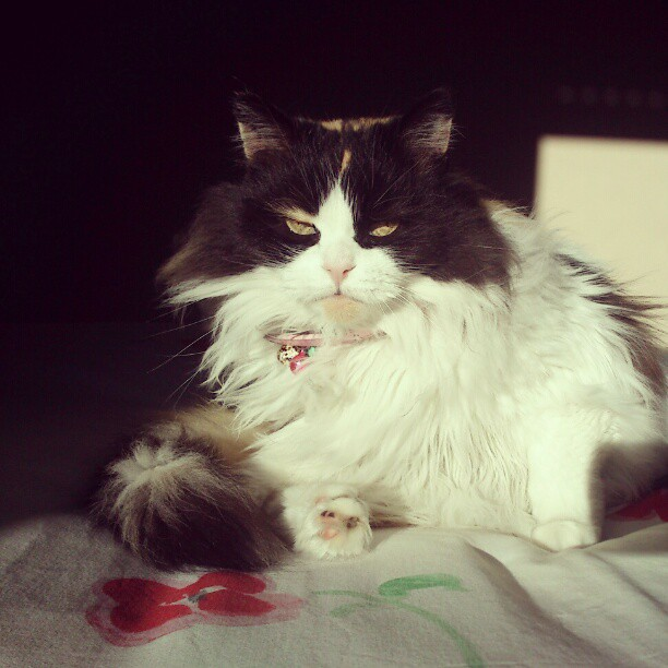 cat looking fierce