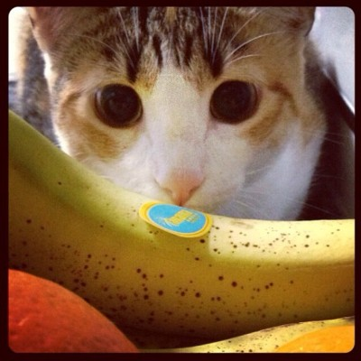 They'll stare down a banana for you