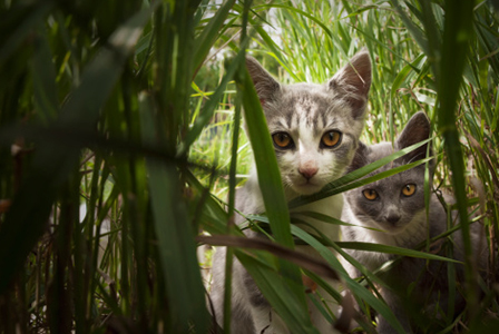 Cats in bamboo | Sheknows.com
