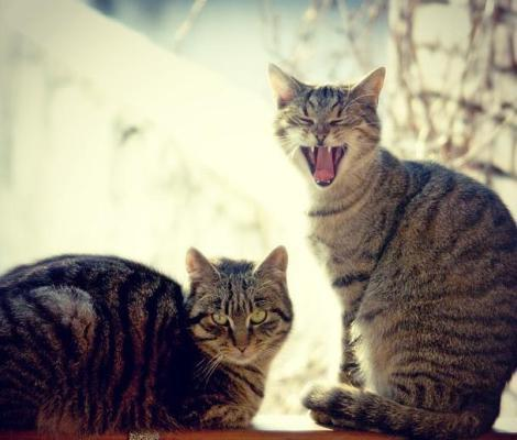 funny cat faces