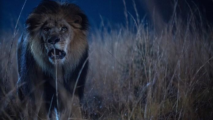 PETA wants CBS' Zoo canceled
