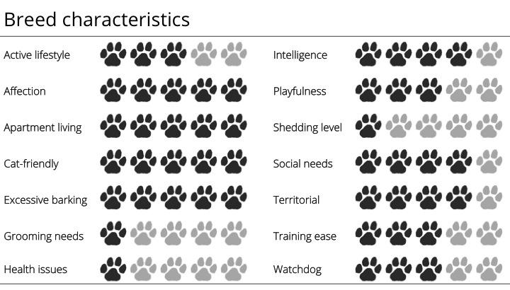chihuahua breed characteristics