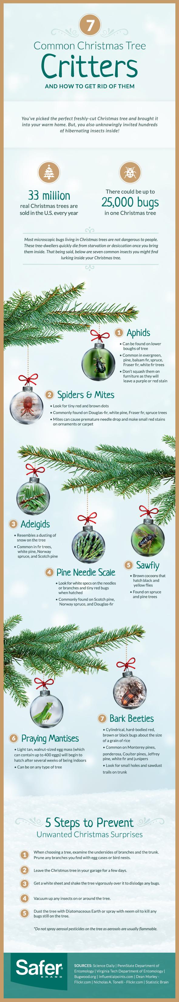 bugs in Christmas tree