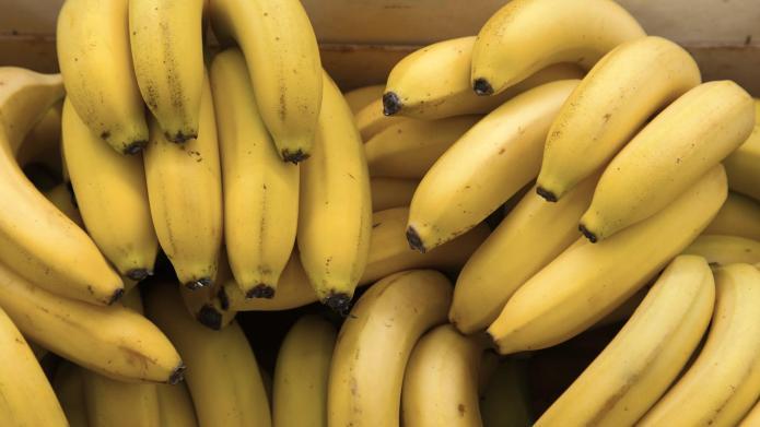 Genetically modified super banana proves GMOs