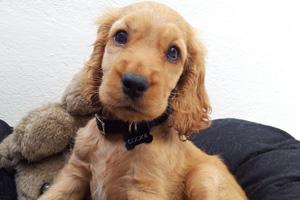 Puppy bowl cornerback