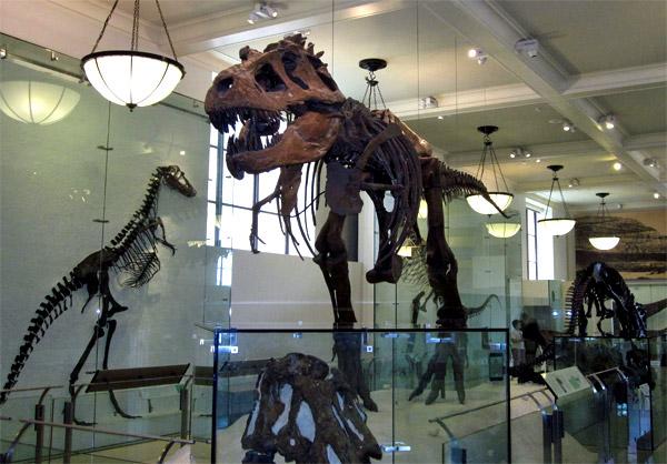 Dinosaur museum exhibit