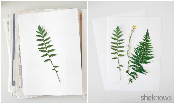 botanical prints 2