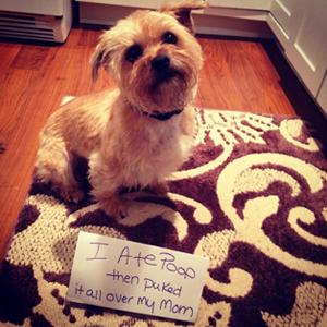 Dog eats his poop   Sheknows.com